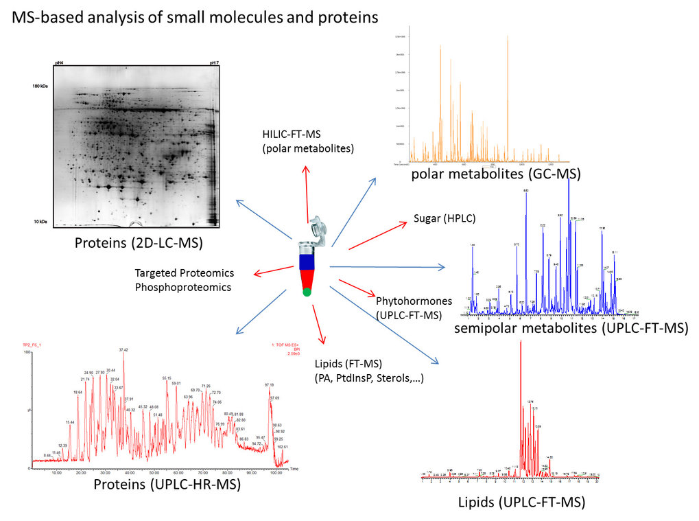 <p>A reliable peak annotation and the discrimination of biological from non-biological compounds is the main limitation of MS-based metabolomics. We can overcome this problem by analyzing three differentially isotope-labeled metabolomes (<sup>13</sup>C, <sup>15</sup>N and <sup>34</sup>S ) and comparing it to an unlabeled sample.</p>