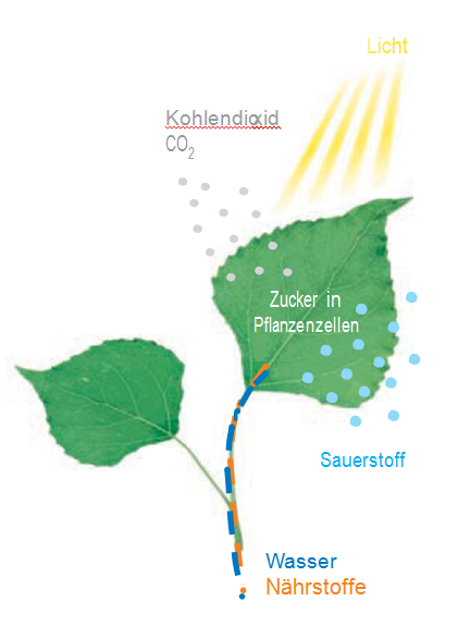 Bedeutung Der Pflanzen