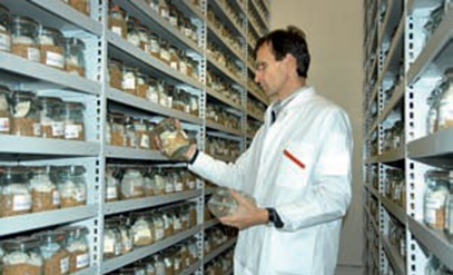 The gene bank Gatersleben stores ca. 145.000 seed samples of crop plants from all over the world. For example, 20.000 different barleys are stored in the gene bank.