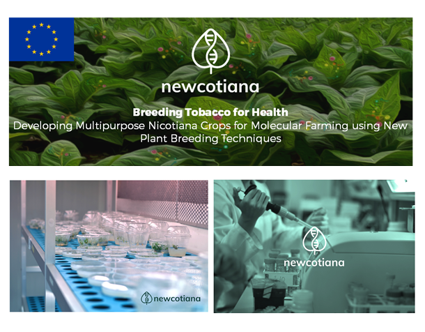 NEWCOTIANA - The EU-Project aims to breed new varieties of tobacco that that will work as biofactories.
