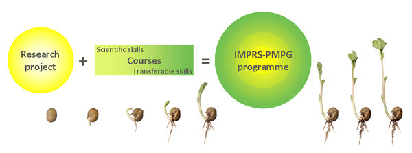 Doctoral Training within IMPRS-PMPG